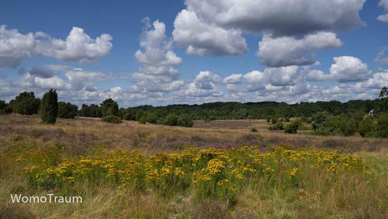Lüneburger Heide bei Niederhaverbeck