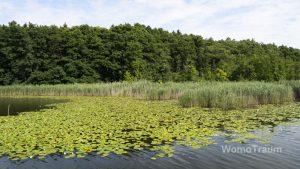 Mirow, Im Seerosenparadies bei Mirow auf der Mecklenburgischen Seenplatte